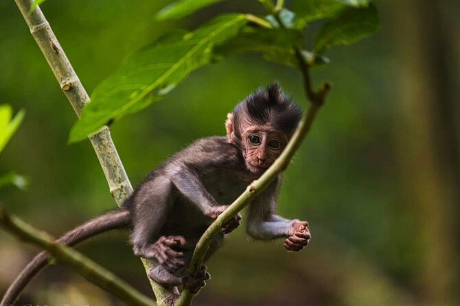 Private Tour - All Inclusive Silver Making Class Monkey Forest And Rice Terrace