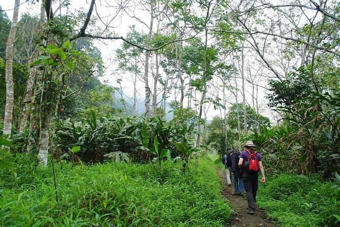 1-day Explore Cuc Phuong National Park from Hanoi