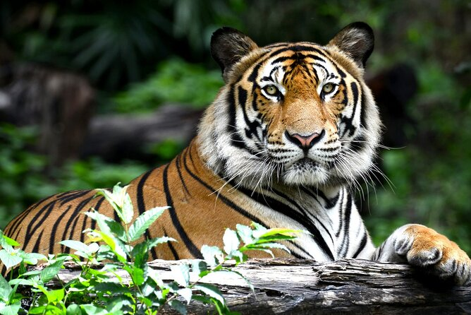 Golden Triangle Tour with Ranthambore by AC Car from Delhi