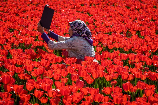 Where to See Tulips in the Netherlands