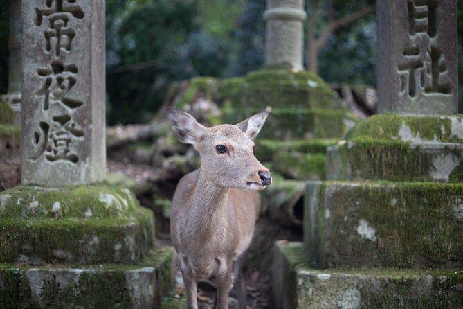 Nara Tours from Kyoto