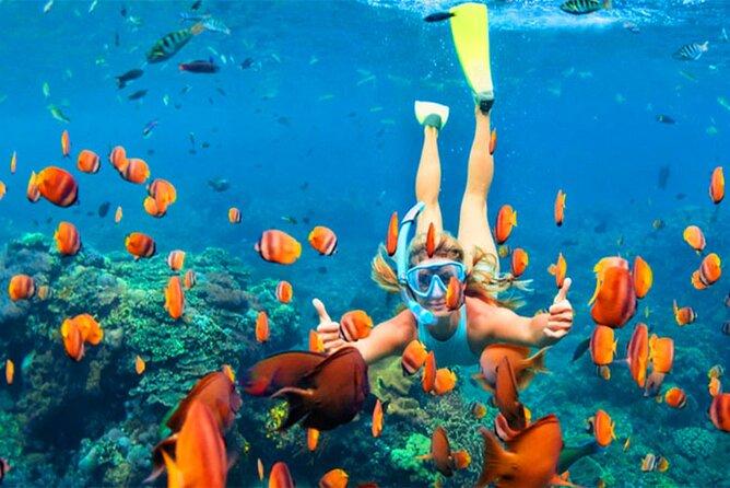 Snorkeling in Negombo