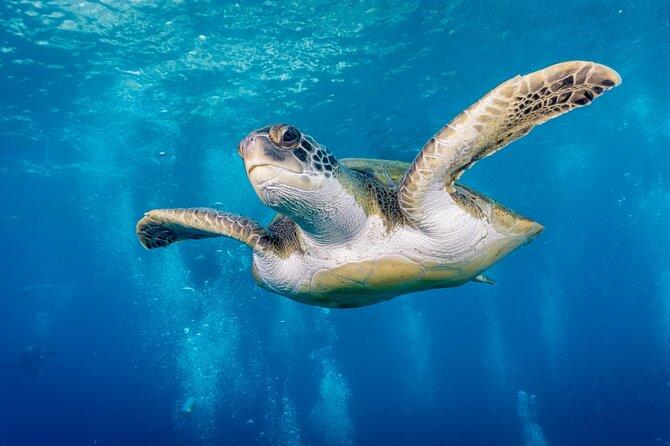 Discover Scuba Diving, Playa de las Americas