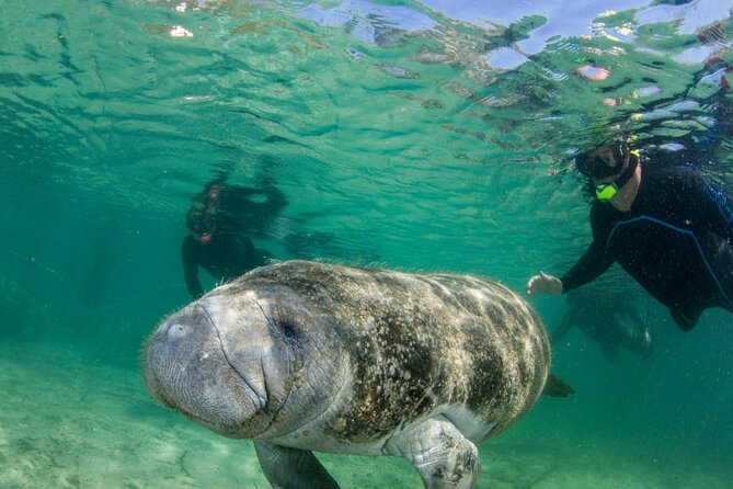 Manatee Snorkeling Tour in the Beautiful Crystal River