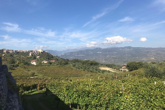 Torrecuso and Sant'Agata dei Goti: ancient vines and authentic local experiences