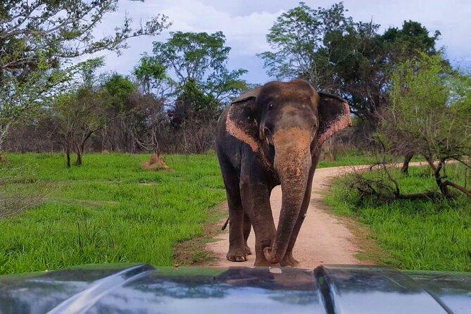 Wasgamuwa National Park - Afternoon Safari