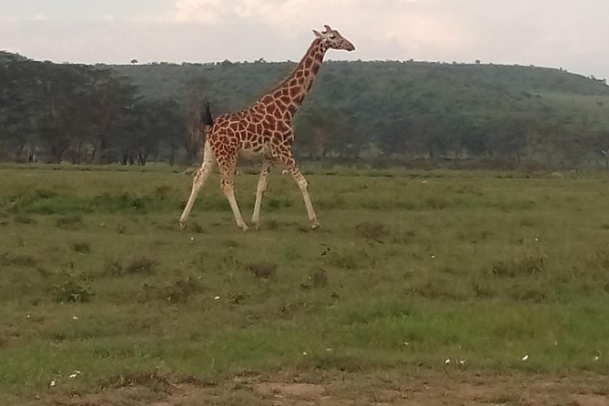 4 Days Safari to Lake Bogoria N/R, Lake Nakuru N/P, Naivasha, Hells gate N/P.