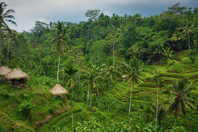 Best of Bali in 3 Days - Private Tour Package