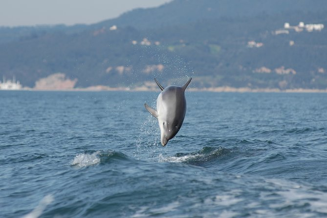 Become a dolphin protector! Lisbon Eco-dolphin watching