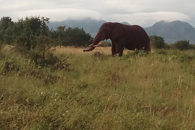 4 Days Safari to Tsavo East N/P, Tsavo West N/P, Taita Hills Wildlife Sanctuary.