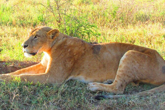 4 Days Safari to Tsavo East N/P, Tsavo West N/P, Amboseli N/P