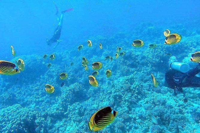 Amazing Giftun Island Snorkeling Trip in Hurghada