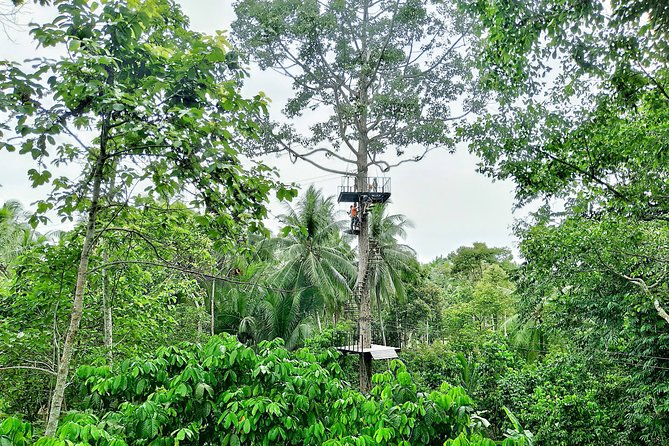 Samui Zipline Explore and Connect with Nature