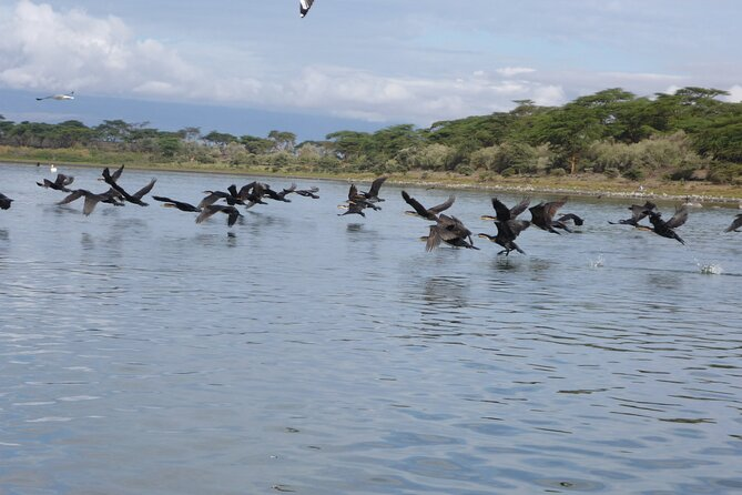 5 Days Safari to Lake Naivasha, Hells Gate N/P, Maasai Mara N/R.