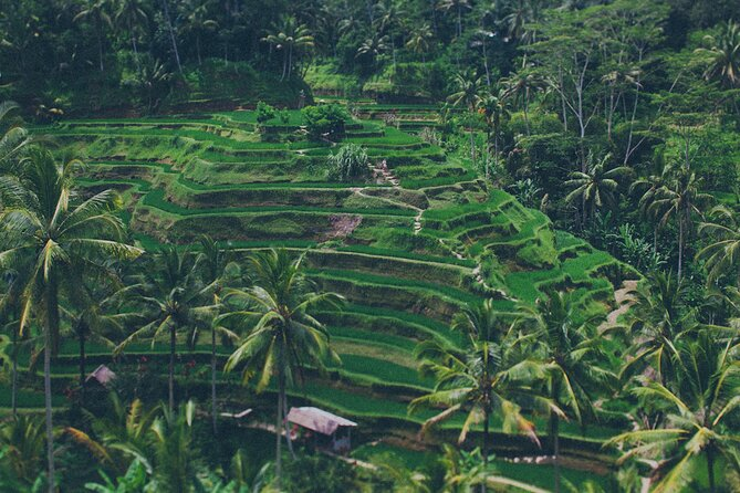Best of Ubud - Private Ubud Tour