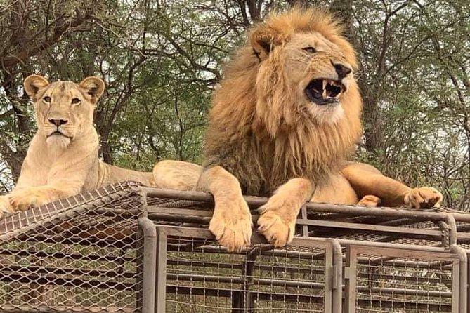 Safari in Bandia reserve and lion ranch