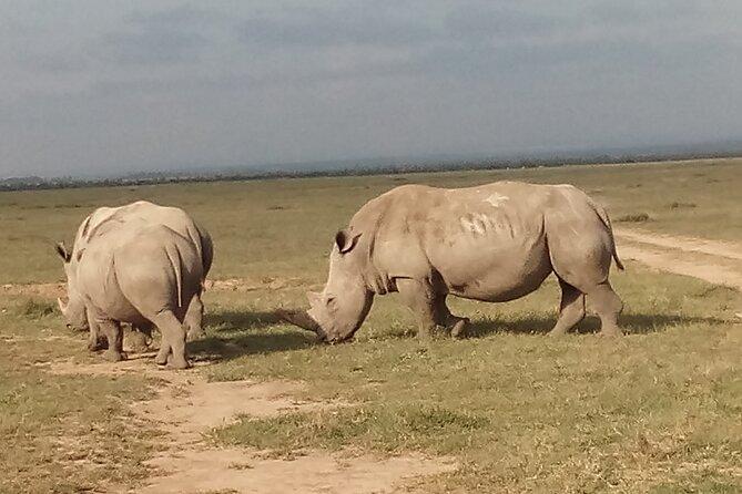 5 Days Safari to Samburu N/R Ol Pejeta Conservancy Hells Gate N/P, Lake Naivasha