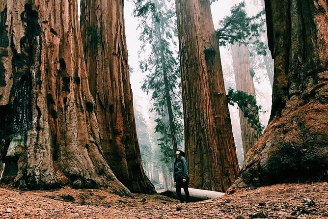 Magical Muir Woods Tour (Private & All-Inclusive)