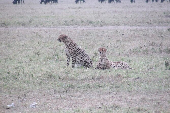 5 Days Safari to Maasai Mara N/R.
