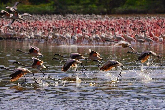 bird paradise and wildlife tour