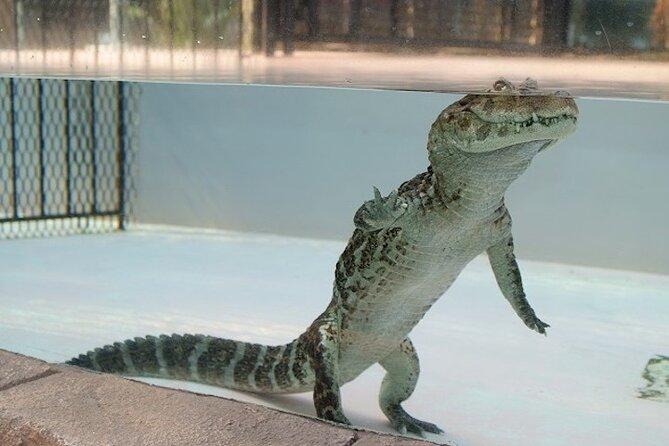 [Shizuoka] Atagawa Tropical and Alligator Garden