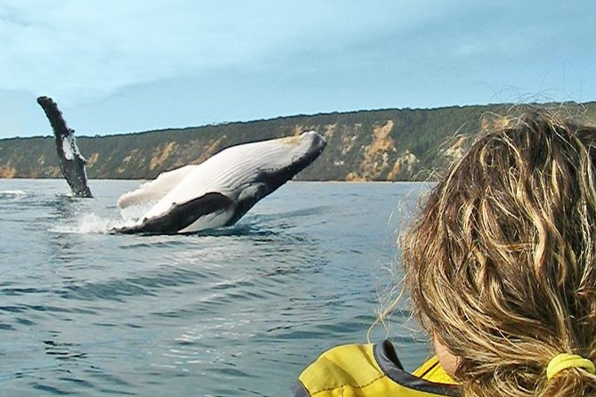 Kayak with Dolphins and 4WD Great Beach Drive Day Trip from Noosa