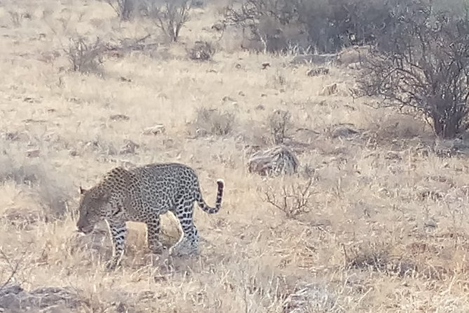 5 Days Safari to Tsavo East N/P, Tsavo West N/P, Amboseli N/P.