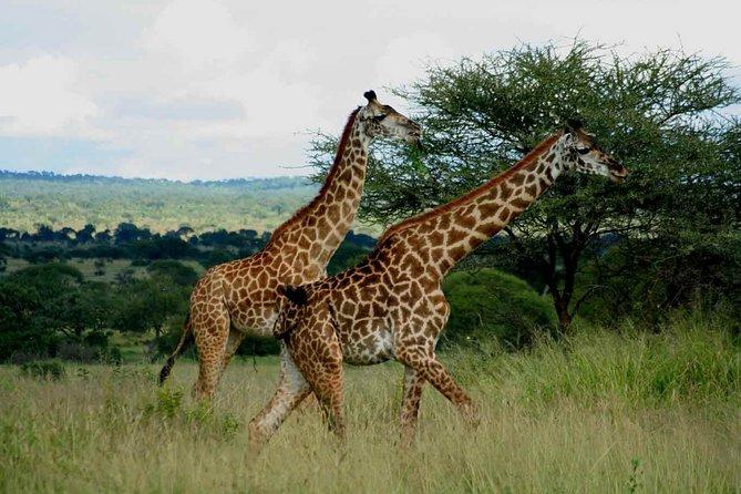 Wildlife Safari Adventure to Saadani National Park