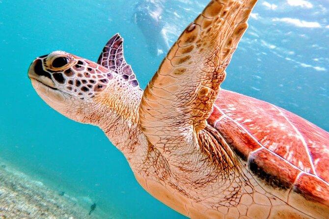 Culebra Island Kayak and Snorkel with Turtles Adventure