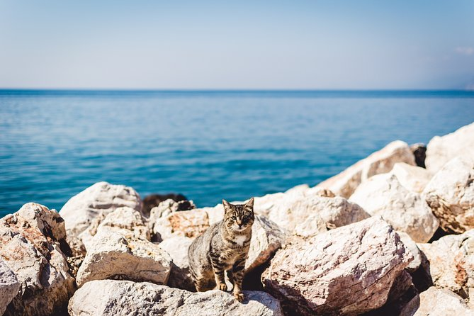 Private Tour-Ghar Lapsi & MALTESE CATS Experience