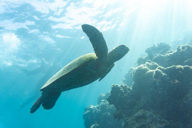 Almost always see turtles
