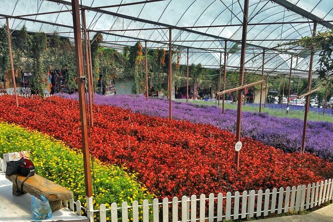 Cameron Highland Full Day Tour (Private Tour)