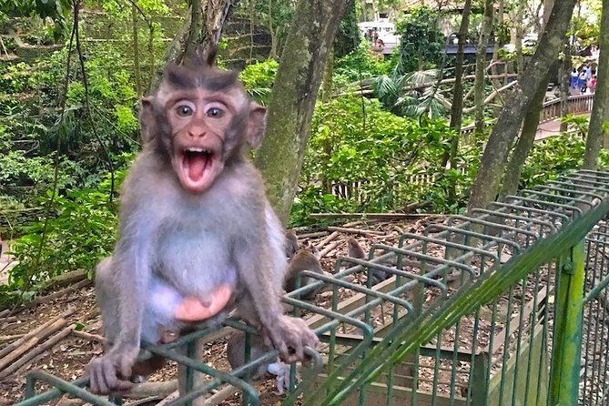 Bali Private Half Day Tour Ubud Market And Monkey Forest