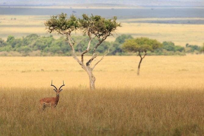 6 Days Safari to Meru N/P, Lake Naivasha, Maasai Mara N/R.