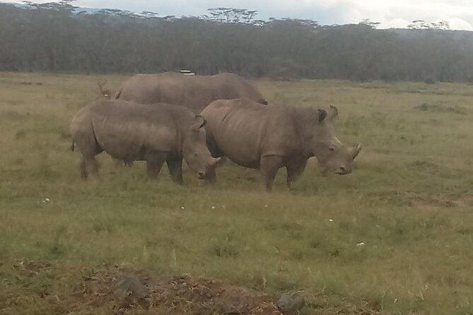 6 Days Safari to Lake Bogoria N/R, Lake Nakuru N/P, Maasai Mara N/R.