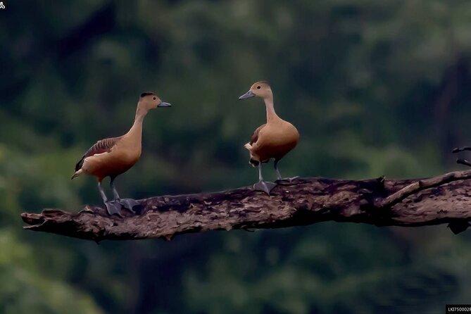 Birdwatching Walk in Ritigala from Habarana