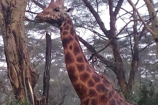 6 Days Safari to Lake Nakuru N/P, Maasai Mara N/R.