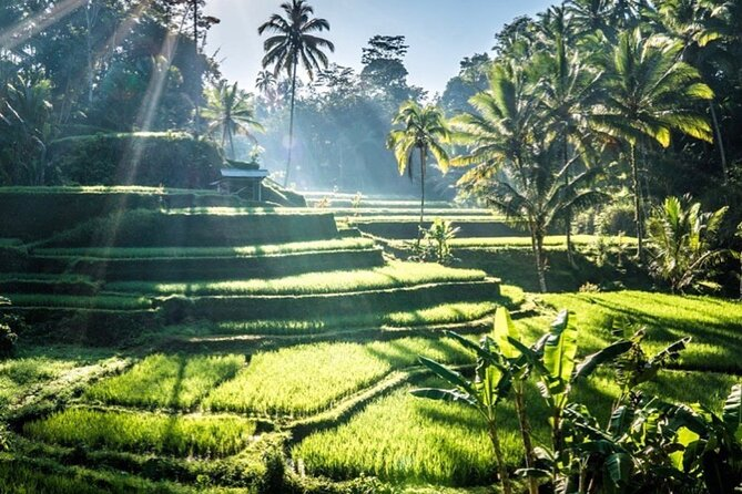 Private Tour-Bali Traditional village Trip Vulcano With Lunch