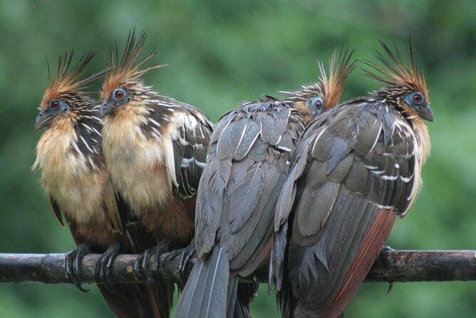 Wild Peru Macaw Clay Lick 4 Days / 3 Nights