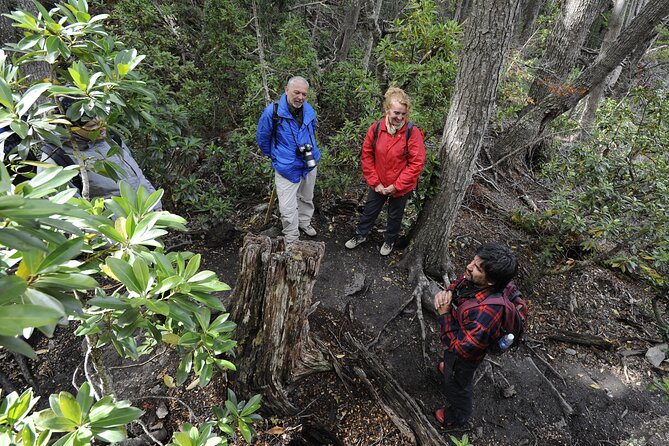 Private Tour: Half-Day Tierra del Fuego National Park with Lunch and Drinks