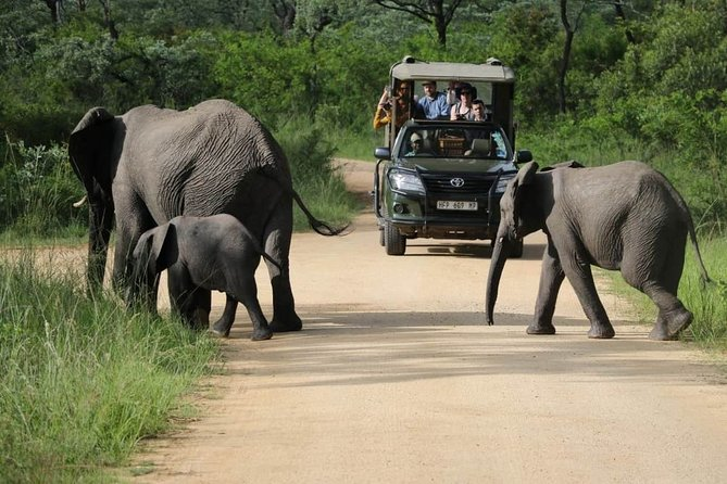 Private Vehicle Morning Safaris in the Kruger National Park