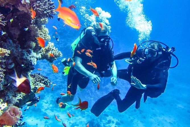 Scuba Diving in Mount Lavinia