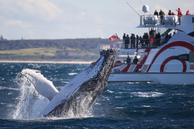 3 Hour Discovery Cruise Ultimate Whale Watching Experience