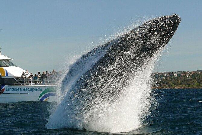 2hr Explorer Cruise - Sydney's best value whale watching cruise