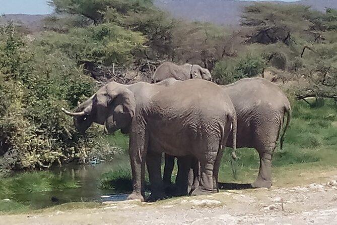 7 Days Safari to Maasai Mara N/R, Lake Nakuru N/P, Samburu N/R.