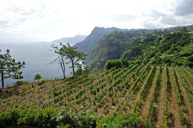 Madeira wine tasting and sightseeing private tour from Funchal