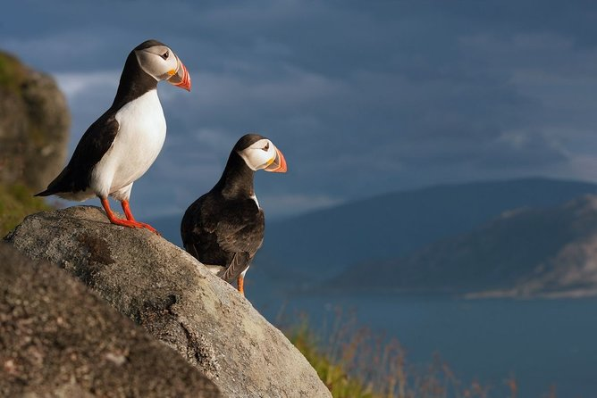 Adventure on a B bird island – private Bird watching tour including lunch