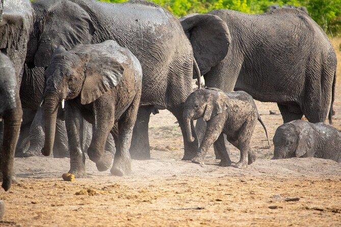 Kruger National Park Best Tour