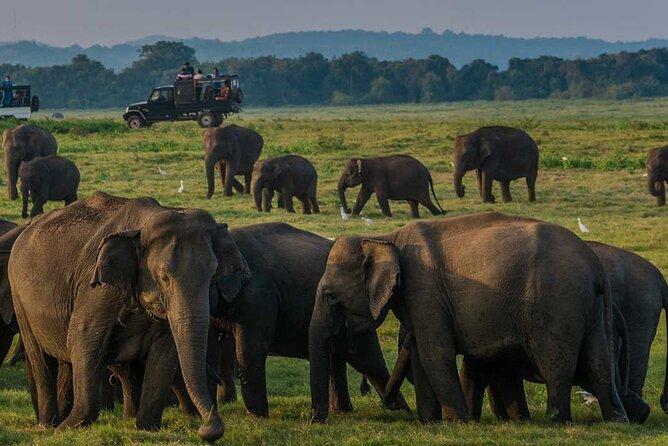Wildlife Safari in Minneriya National Park - Afternoon Game Drive