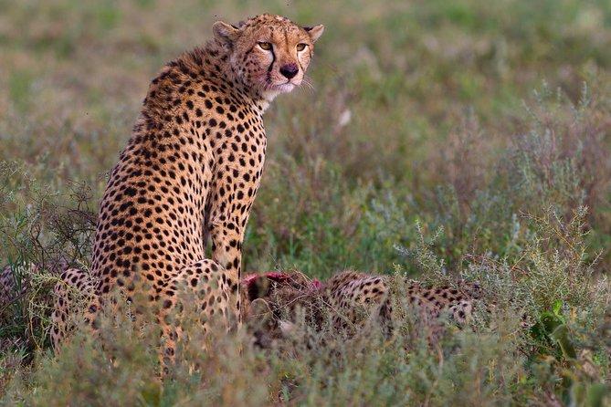 Touch of Wilderness Safari